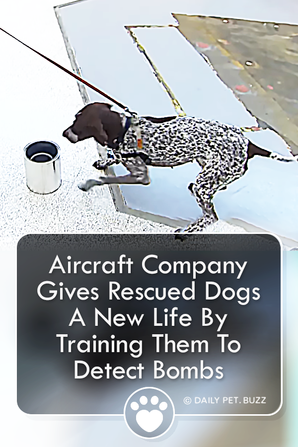 Aircraft Company Gives Rescued Dogs A New Life By Training Them To Detect Bombs