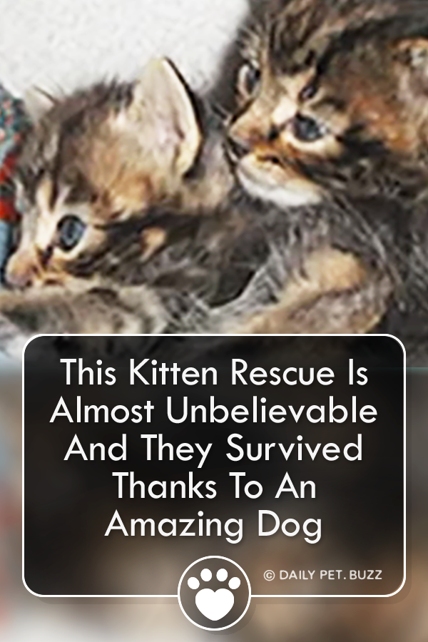 This Kitten Rescue Is Almost Unbelievable And They Survived Thanks To An Amazing Dog