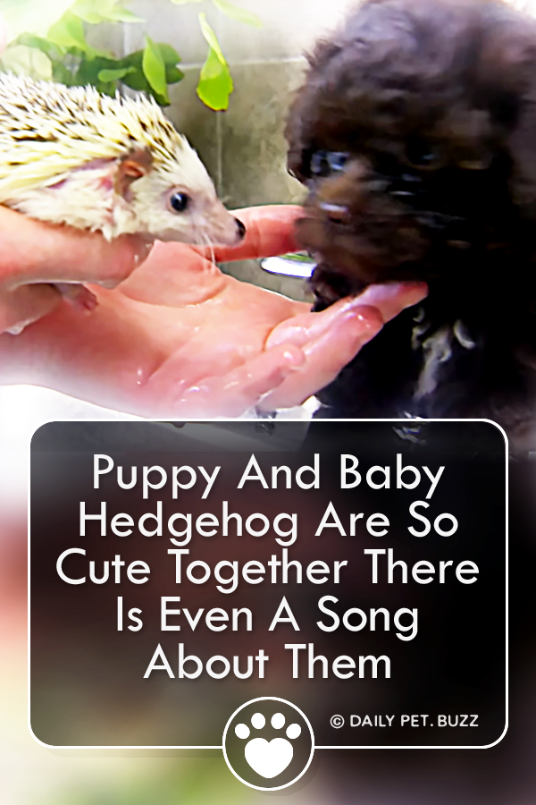 Puppy And Baby Hedgehog Are So Cute Together There Is Even A Song About Them