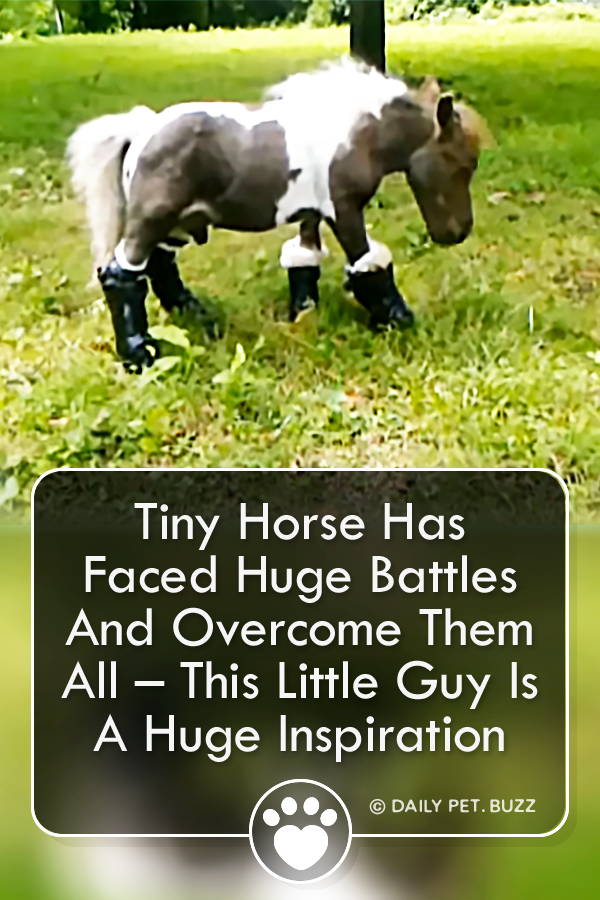 Tiny Horse Has Faced Huge Battles And Overcome Them All – This Little Guy Is A Huge Inspiration