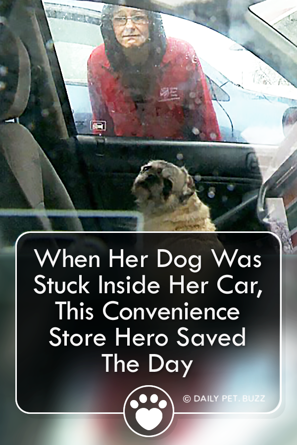 When Her Dog Was Stuck Inside Her Car, This Convenience Store Hero Saved The Day