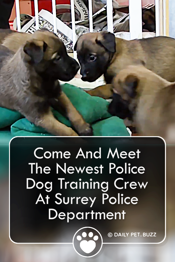 Come And Meet The Newest Police Dog Training Crew At Surrey Police Department