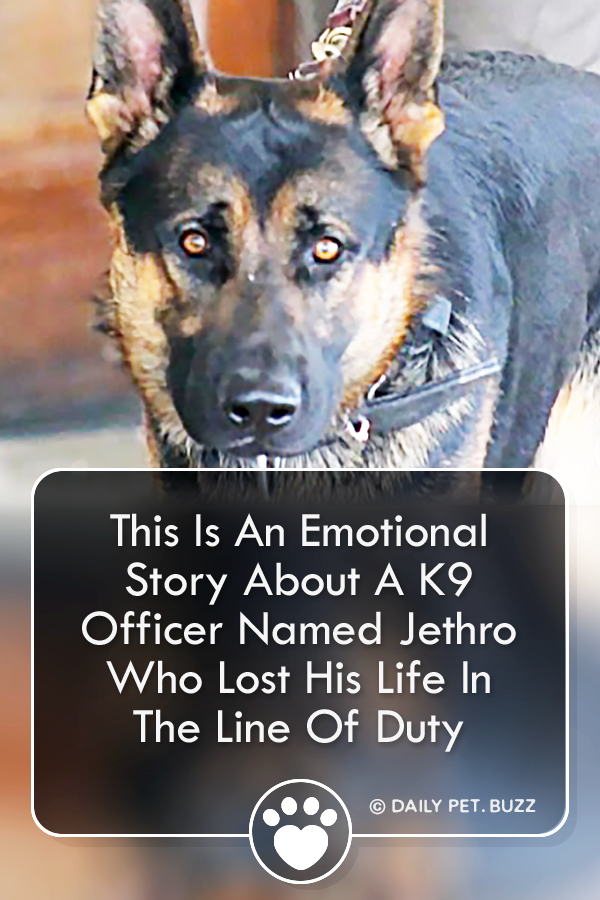 This Is An Emotional Story About A K9 Officer Named Jethro Who Lost His Life In The Line Of Duty