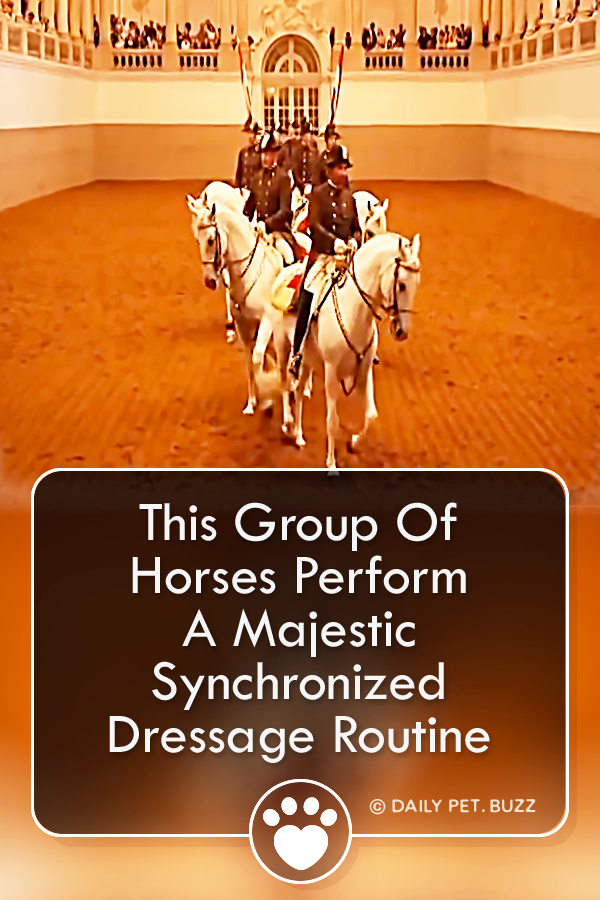 This Group Of Horses Perform A Majestic Synchronized Dressage Routine