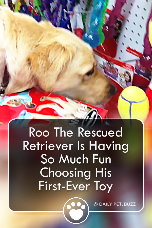 Roo The Rescued Retriever Is Having So Much Fun Choosing His First-Ever Toy