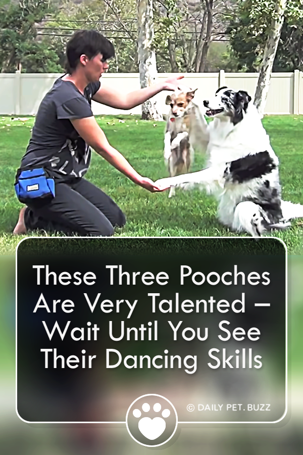 These Three Pooches Are Very Talented – Wait Until You See Their Dancing Skills