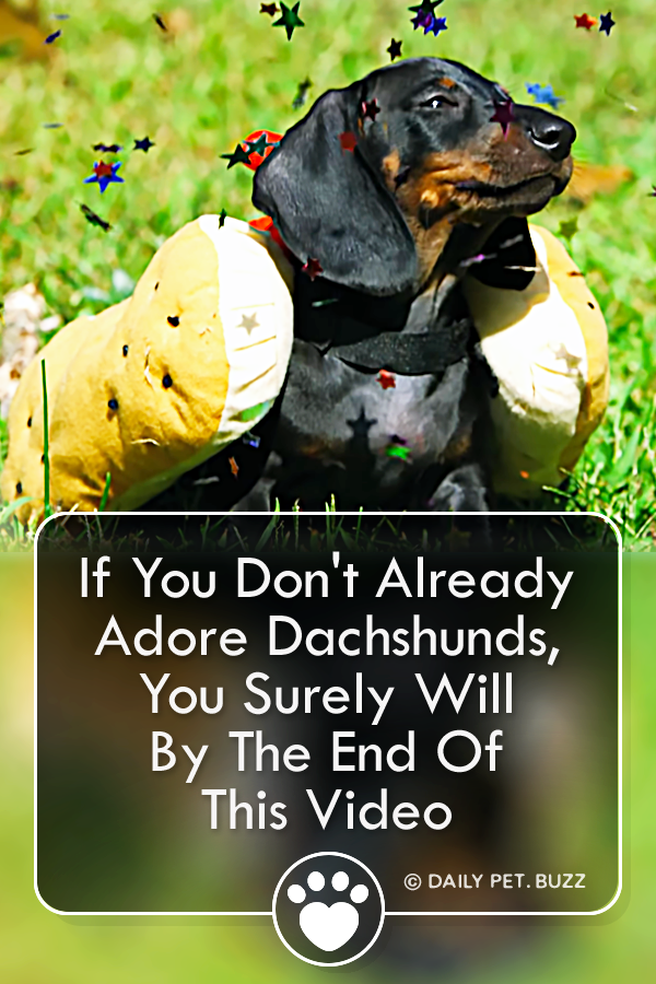 If You Don\'t Already Adore Dachshunds, You Surely Will By The End Of This Video