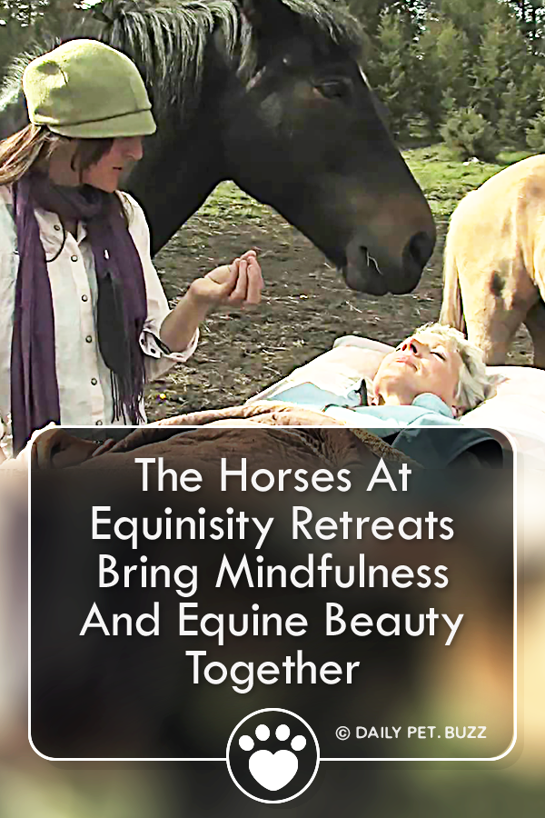 The Horses At Equinisity Retreats Bring Mindfulness And Equine Beauty Together