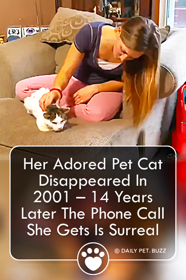 Her Adored Pet Cat Disappeared In 2001 – 14 Years Later The Phone Call She Gets Is Surreal