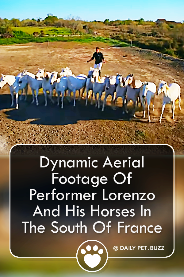 Dynamic Aerial Footage Of Performer Lorenzo And His Horses In The South Of France