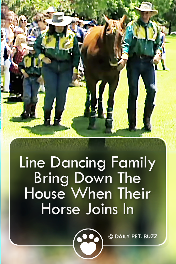 Line Dancing Family Bring Down The House When Their Horse Joins In