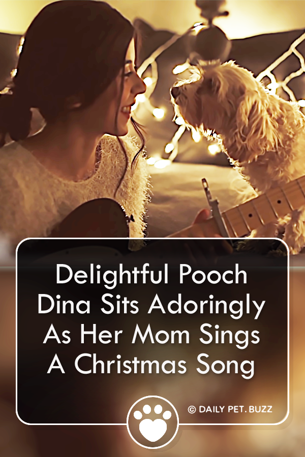 Delightful Pooch Dina Sits Adoringly As Her Mom Sings A Christmas Song