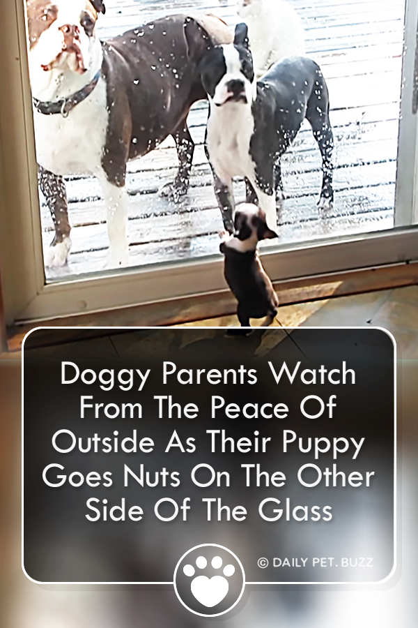 Doggy Parents Watch From The Peace Of Outside As Their Puppy Goes Nuts On The Other Side Of The Glass