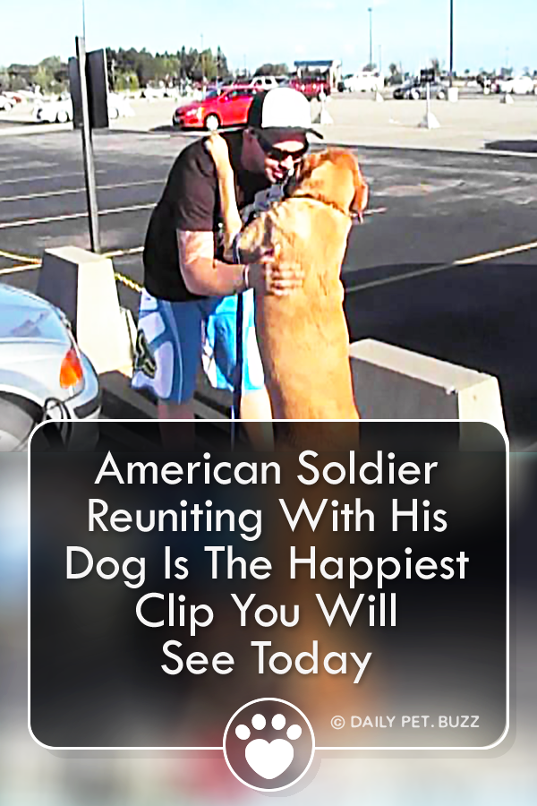 American Soldier Reuniting With His Dog Is The Happiest Clip You Will See Today