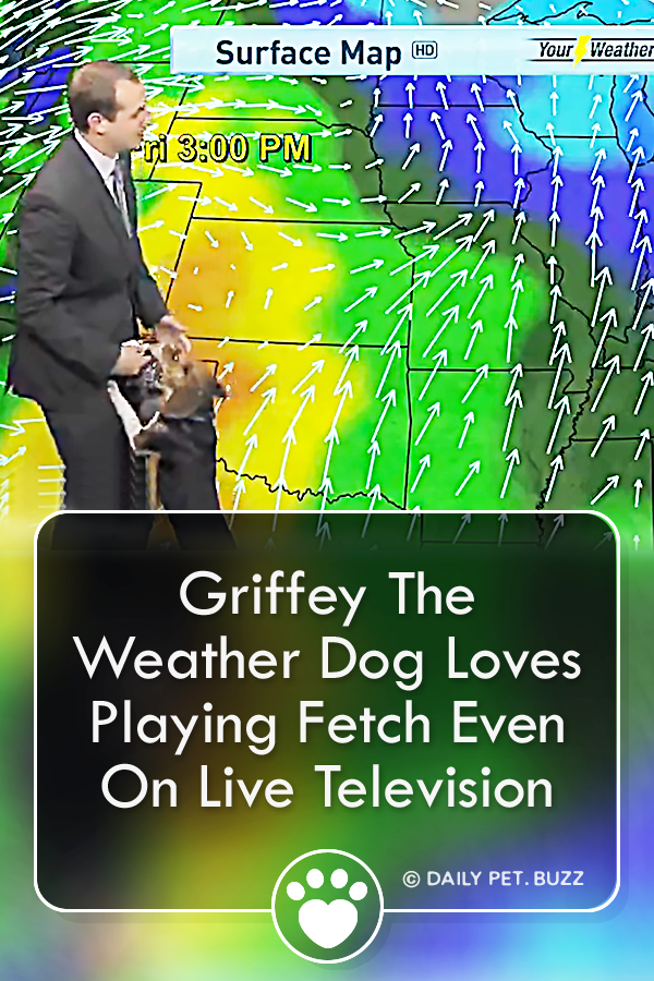 Griffey The Weather Dog Loves Playing Fetch Even On Live Television