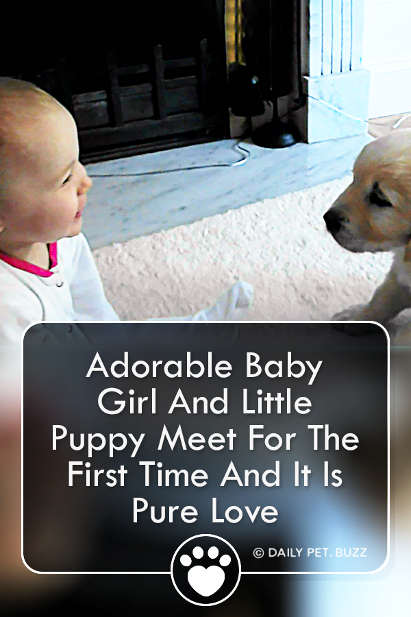 Adorable Baby Girl And Little Puppy Meet For The First Time And It Is Pure Love