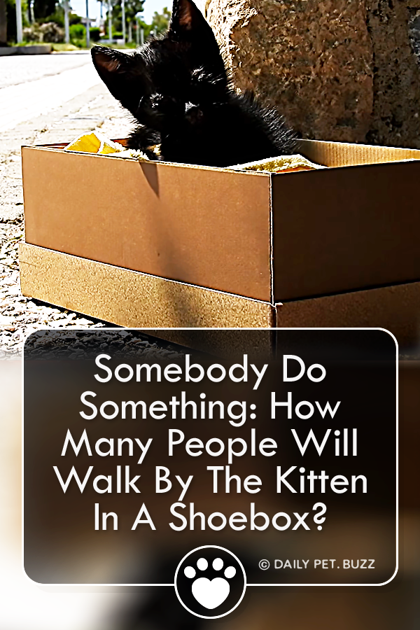 Somebody Do Something: How Many People Will Walk By The Kitten In A Shoebox?