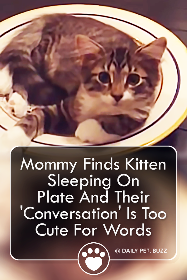 Mommy Finds Kitten Sleeping On Plate And Their \'Conversation\' Is Too Cute For Words