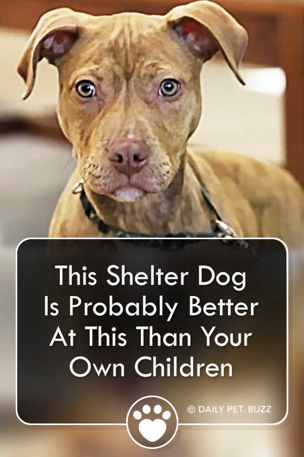 This Shelter Dog Is Probably Better At This Than Your Own Children