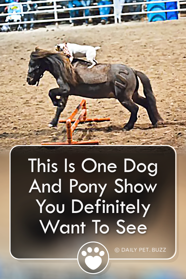 This Is One Dog And Pony Show You Definitely Want To See