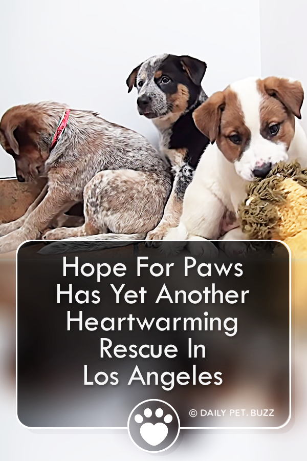 Hope For Paws Has Yet Another Heartwarming Rescue In Los Angeles