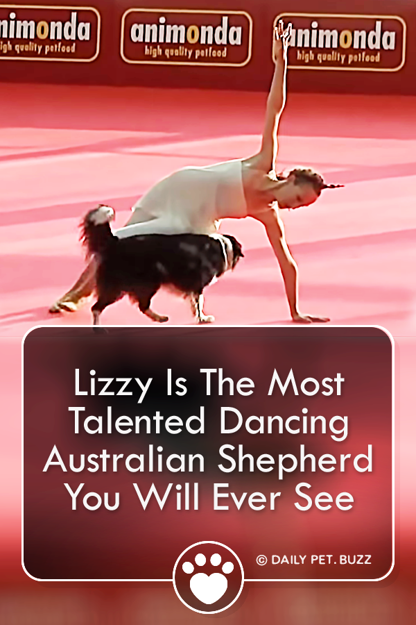 Lizzy Is The Most Talented Dancing Australian Shepherd You Will Ever See