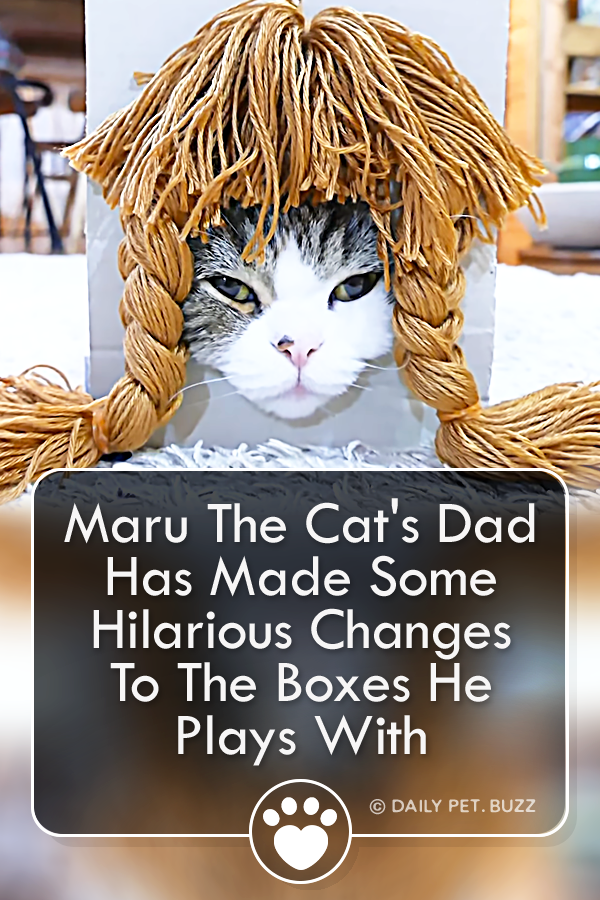 Maru The Cat\'s Dad Has Made Some Hilarious Changes To The Boxes He Plays With