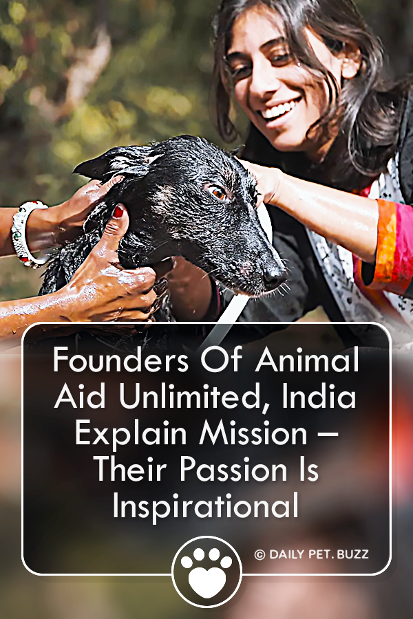 Founders Of Animal Aid Unlimited, India Explain Mission – Their Passion Is Inspirational