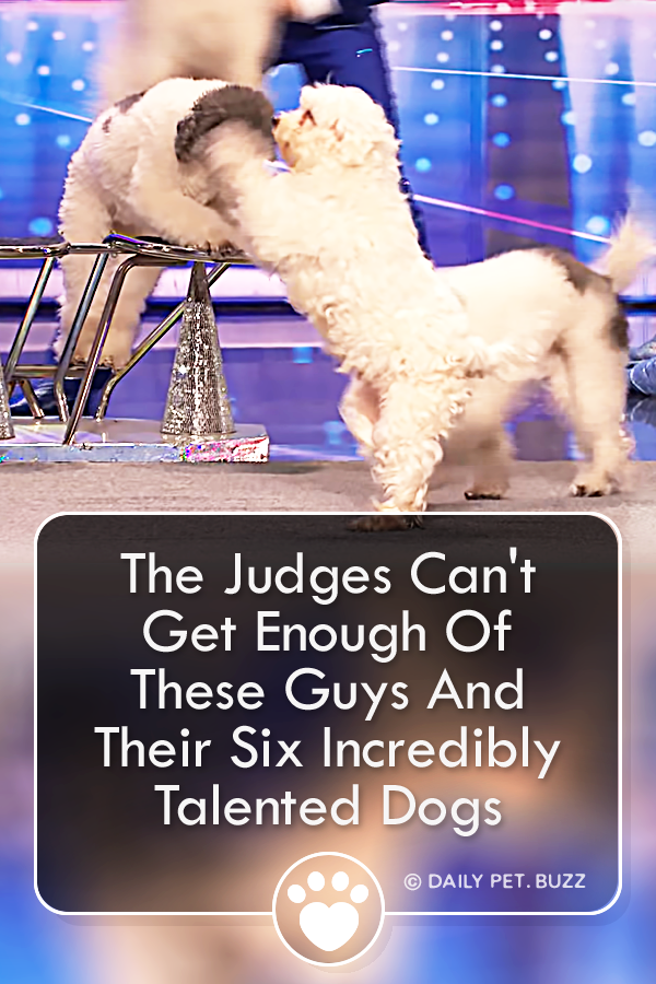 The Judges Can\'t Get Enough Of These Guys And Their Six Incredibly Talented Dogs