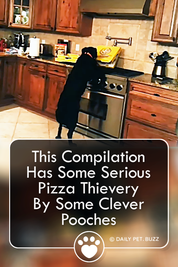 This Compilation Has Some Serious Pizza Thievery By Some Clever Pooches