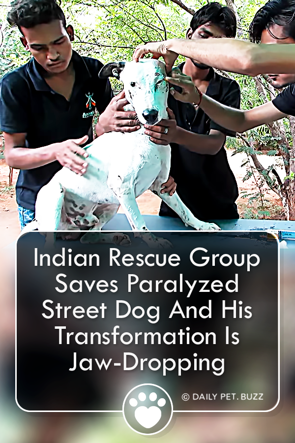 Indian Rescue Group Saves Paralyzed Street Dog And His Transformation Is Jaw-Dropping