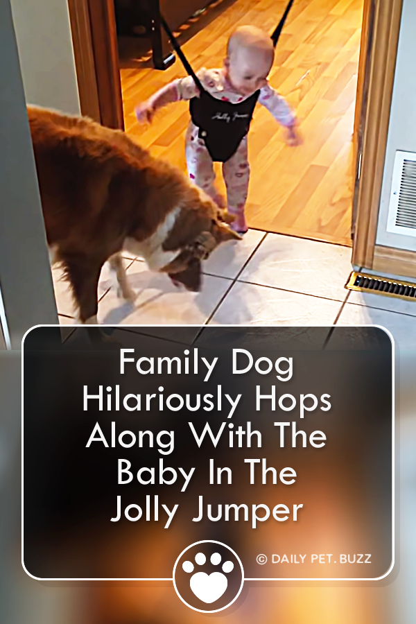 Family Dog Hilariously Hops Along With The Baby In The Jolly Jumper