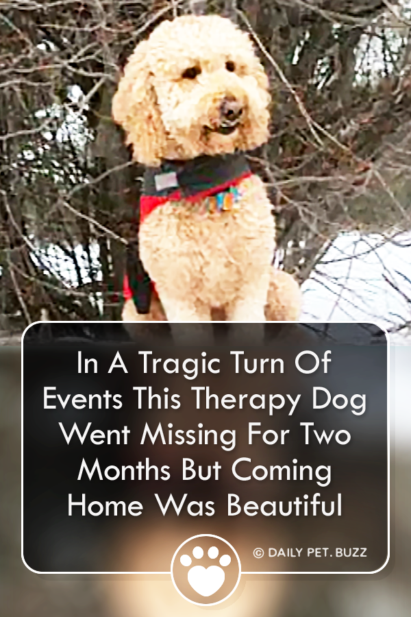 In A Tragic Turn Of Events This Therapy Dog Went Missing For Two Months But Coming Home Was Beautiful