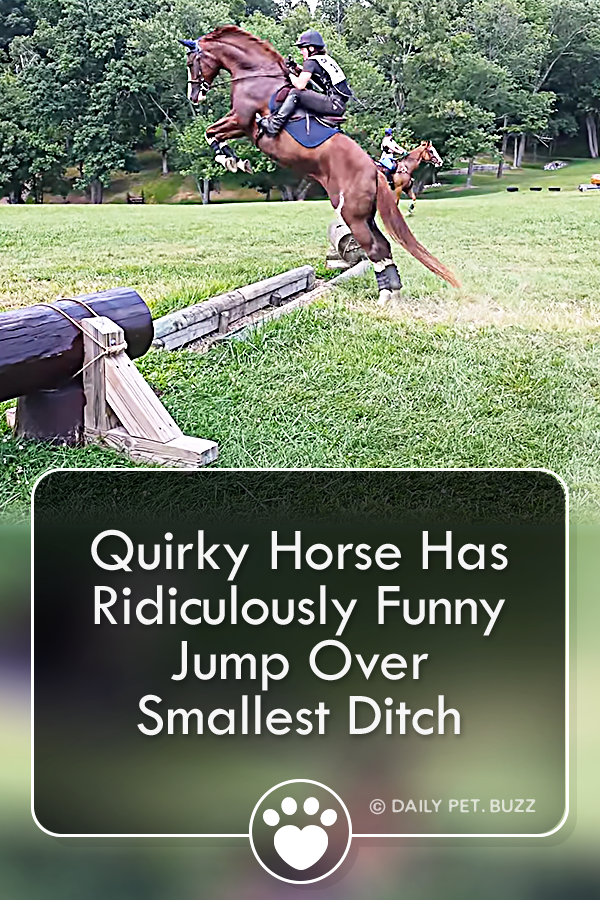 Quirky Horse Has Ridiculously Funny Jump Over Smallest Ditch