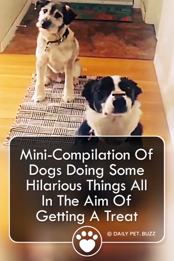 Mini-Compilation Of Dogs Doing Some Hilarious Things All In The Aim Of Getting A Treat