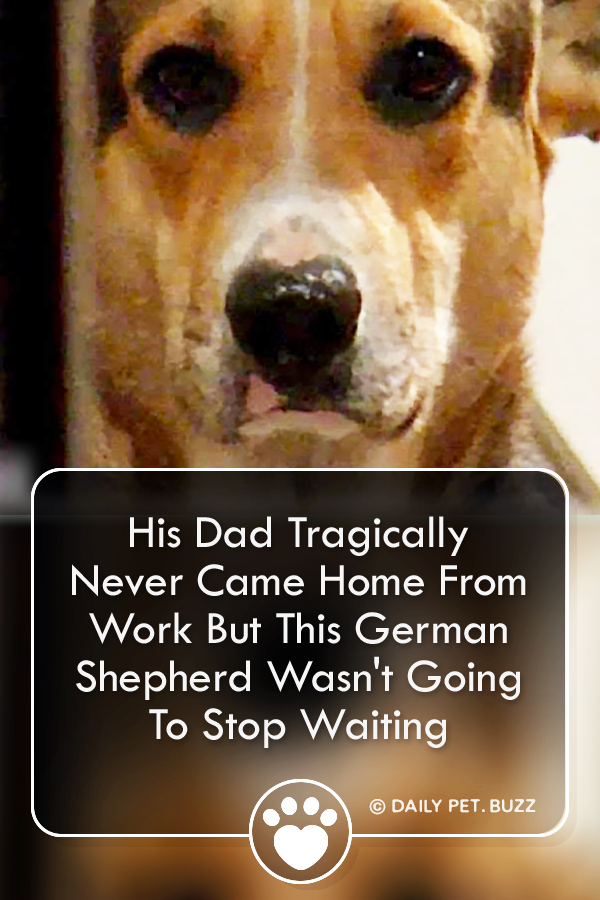 His Dad Tragically Never Came Home From Work But This German Shepherd Wasn\'t Going To Stop Waiting