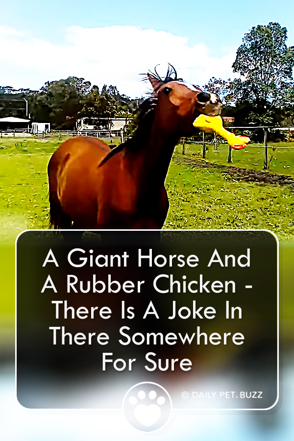A Giant Horse And A Rubber Chicken - There Is A Joke In There Somewhere For Sure