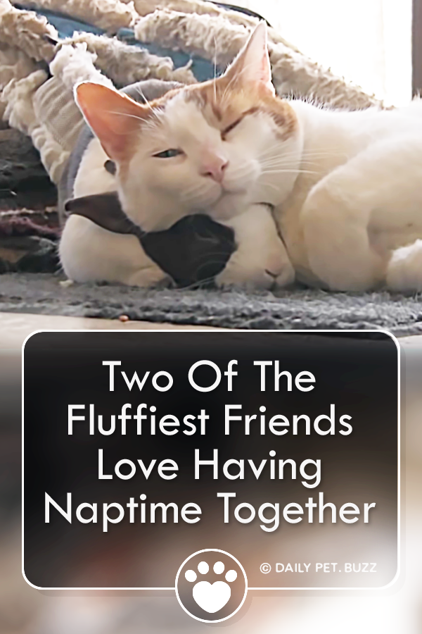 Two Of The Fluffiest Friends Love Having Naptime Together