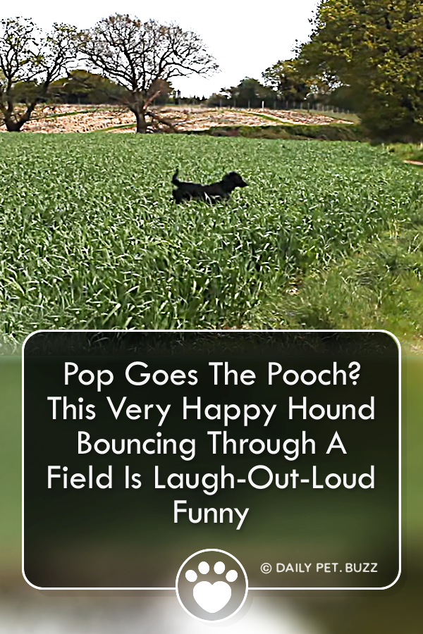 Pop Goes The Pooch? This Very Happy Hound Bouncing Through A Field Is Laugh-Out-Loud Funny
