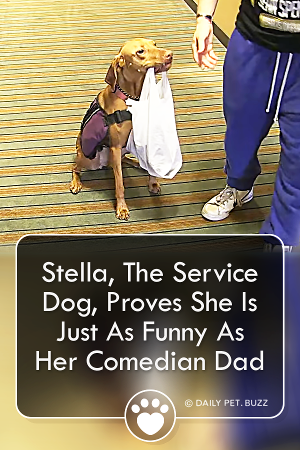 Stella, The Service Dog, Proves She Is Just As Funny As Her Comedian Dad