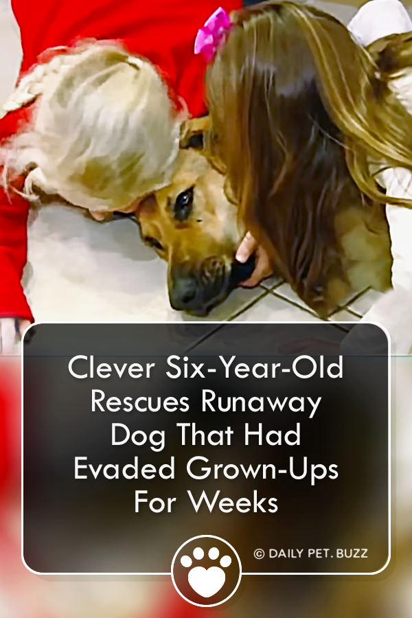 Clever Six-Year-Old Rescues Runaway Dog That Had Evaded Grown-Ups For Weeks