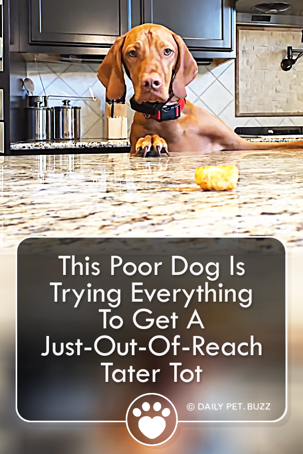 This Poor Dog Is Trying Everything To Get A Just-Out-Of-Reach Tater Tot