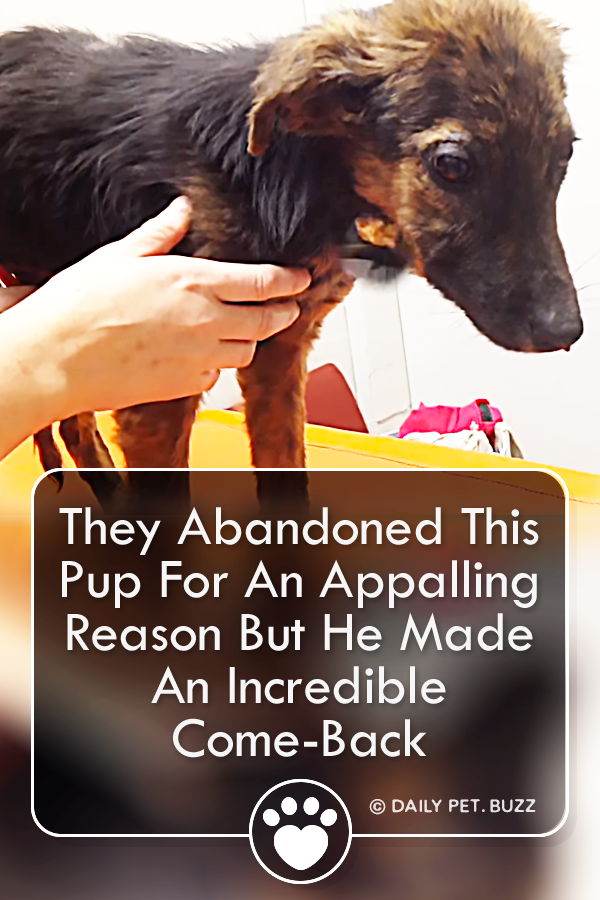 They Abandoned This Pup For An Appalling Reason But He Made An Incredible Come-Back