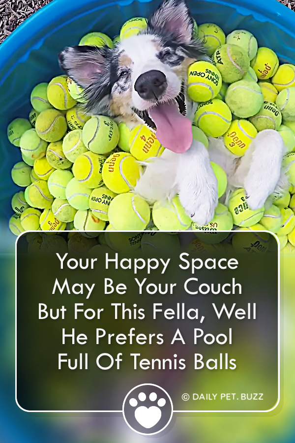Your Happy Space May Be Your Couch But For This Fella, Well He Prefers A Pool Full Of Tennis Balls