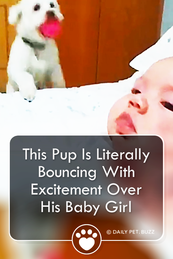 This Pup Is Literally Bouncing With Excitement Over His Baby Girl