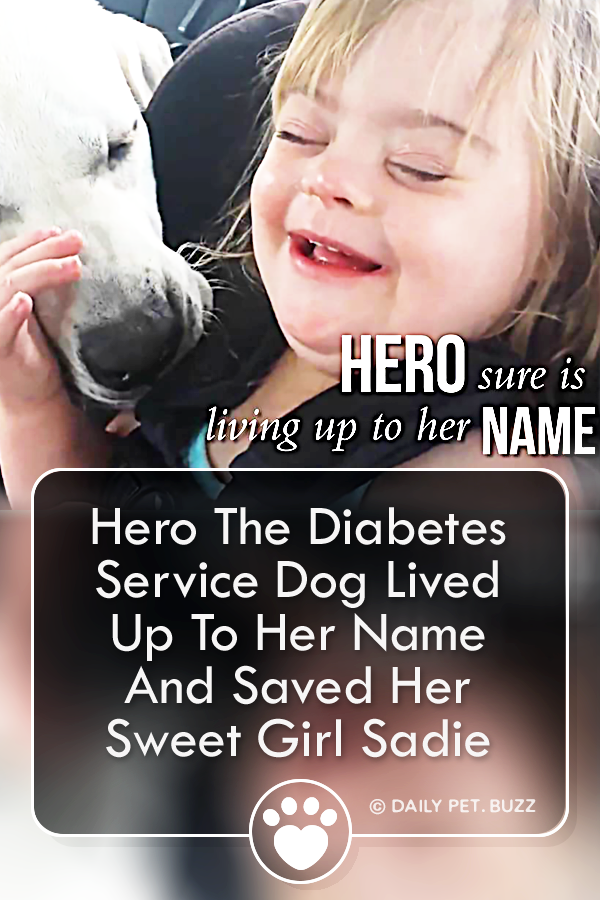 Hero The Diabetes Service Dog Lived Up To Her Name And Saved Her Sweet Girl Sadie