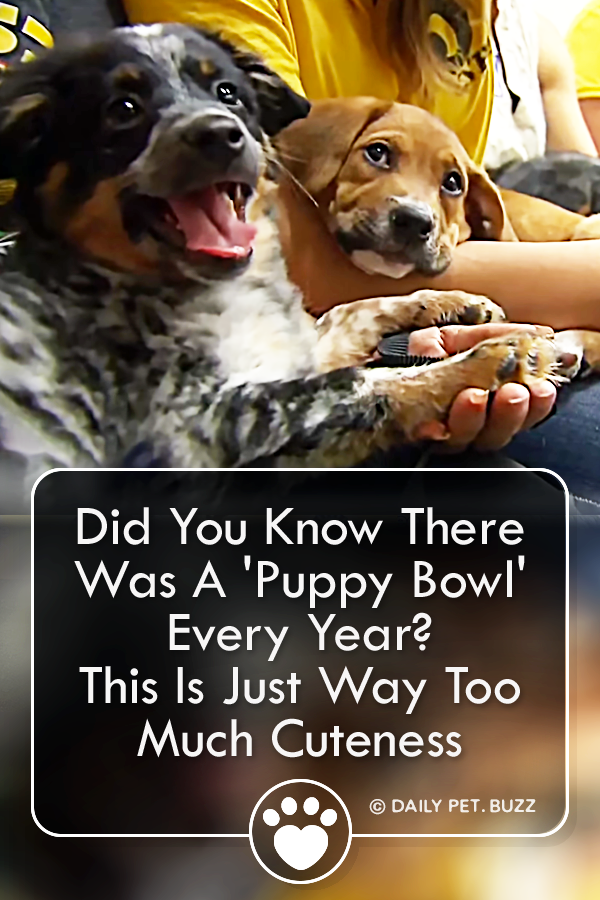Did You Know There Was A \'Puppy Bowl\' Every Year? This Is Just Way Too Much Cuteness
