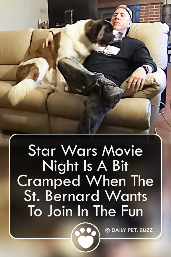 Star Wars Movie Night Is A Bit Cramped When The St. Bernard Wants To Join In The Fun