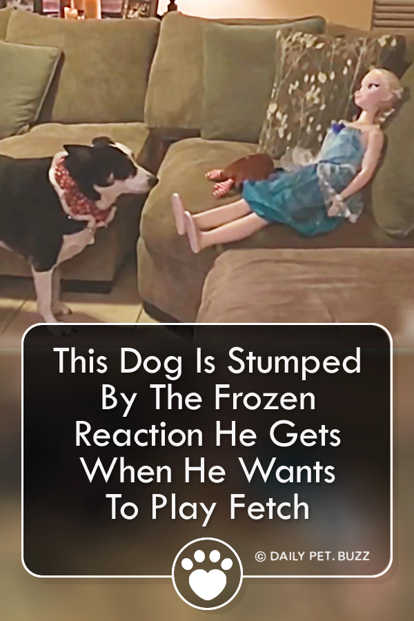 This Dog Is Stumped By The Frozen Reaction He Gets When He Wants To Play Fetch