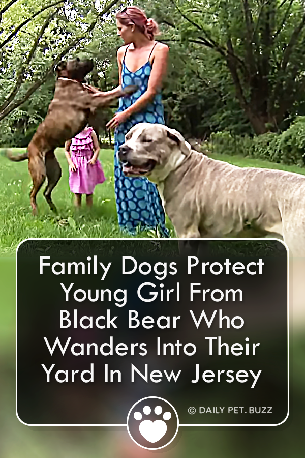 Family Dogs Protect Young Girl From Black Bear Who Wanders Into Their Yard In New Jersey